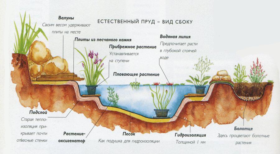 Естественный пруд вид сбоку
