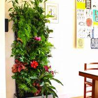 Зимние сады, внутреннее озеленение и фитодизайн 1
