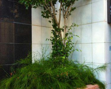 Озеленение, живые изгороди и крупномеры