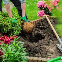 Озеленение, живые изгороди и крупномеры 14