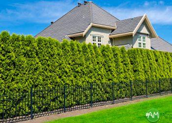 Озеленение, живые изгороди и крупномеры 5