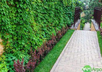 Вертикальное озеленение 8