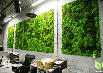 Озеленение офиса 24