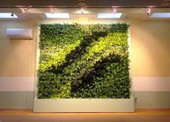 Озеленение офиса 25