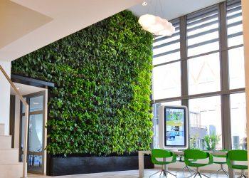 Озеленение офиса 6