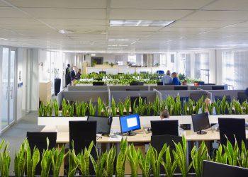 Озеленение офиса 7