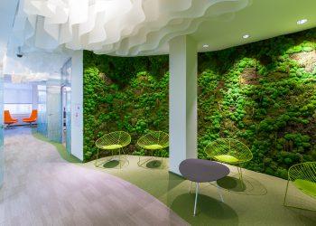 Озеленение офиса 8