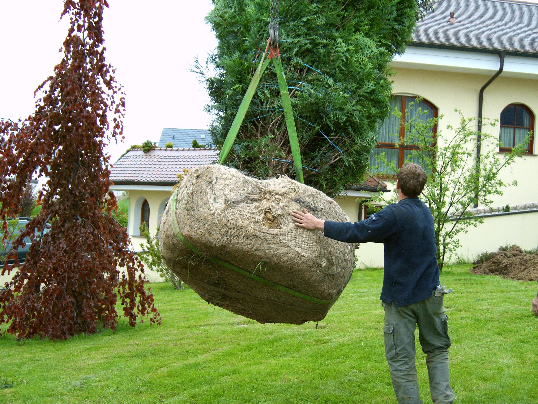 Сколько стоит посадка деревьев