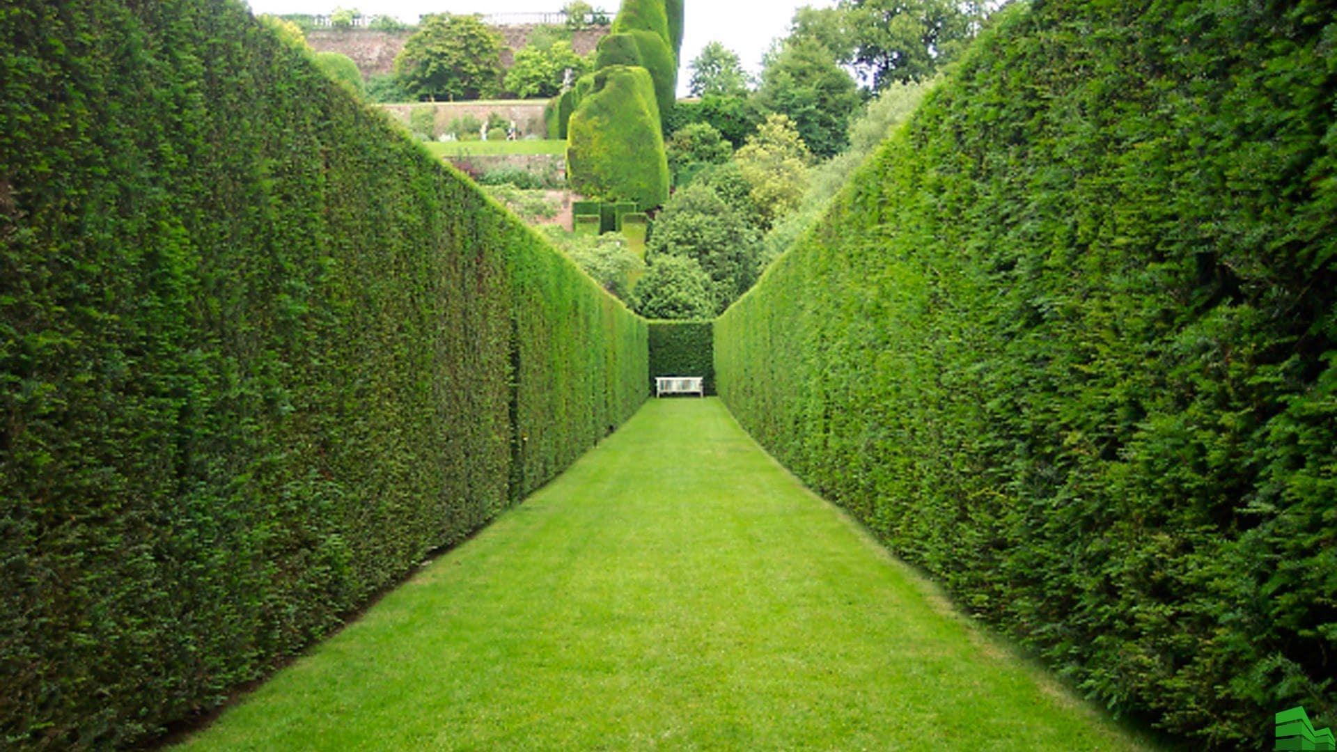 Скарификация газона. Что это такое и как поможет сохранить ваш газон