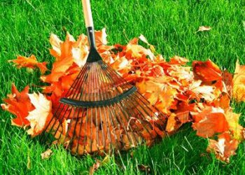 autumn_foliage_cleaning