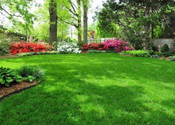 lawn1-2-1024×769-min