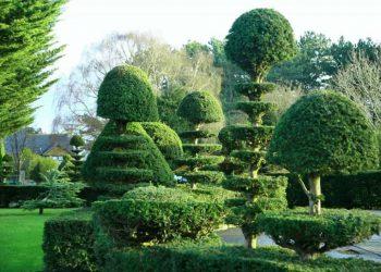 Topiary-v-sadu-min