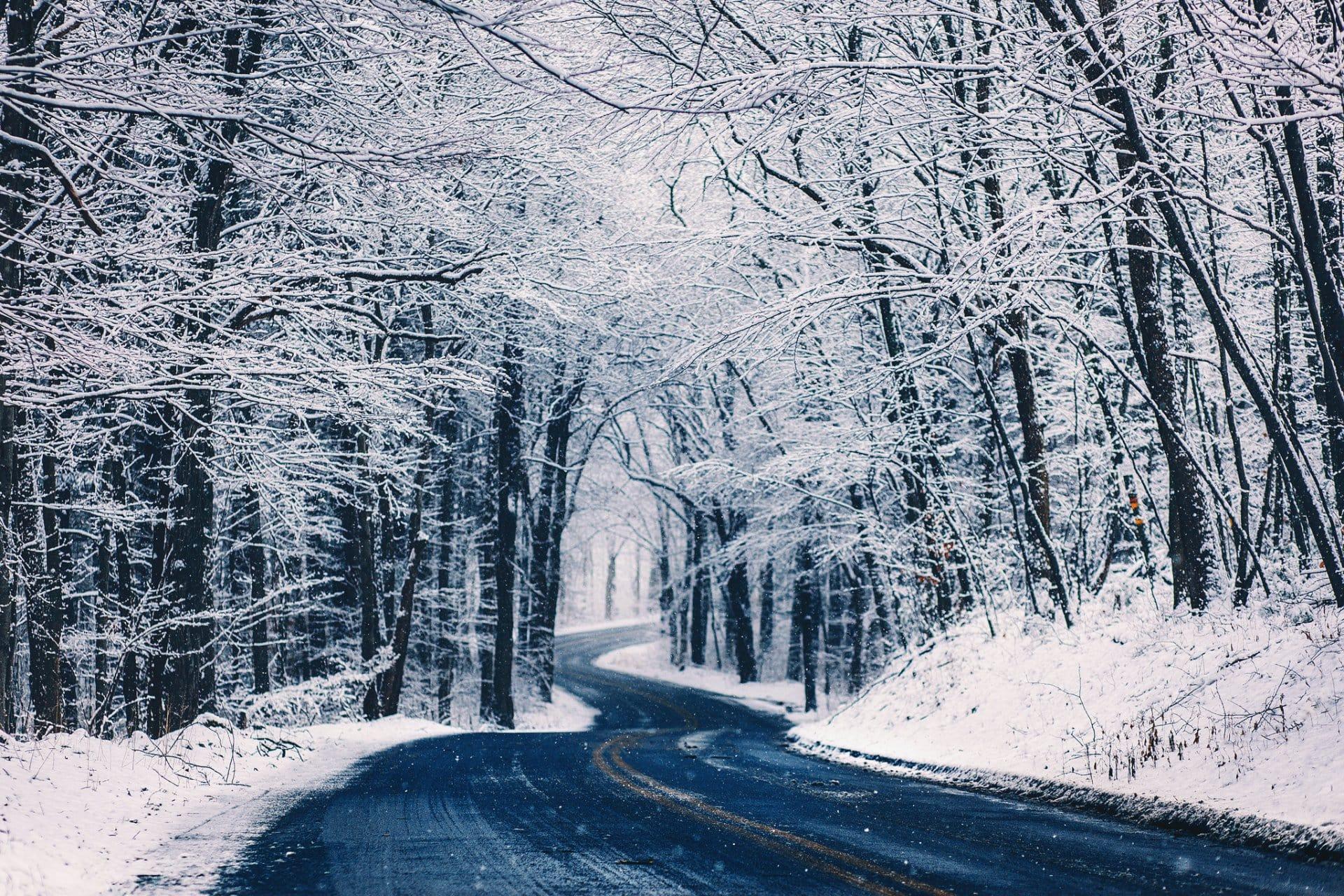 Посадка деревьев зимой. Что важно знать?
