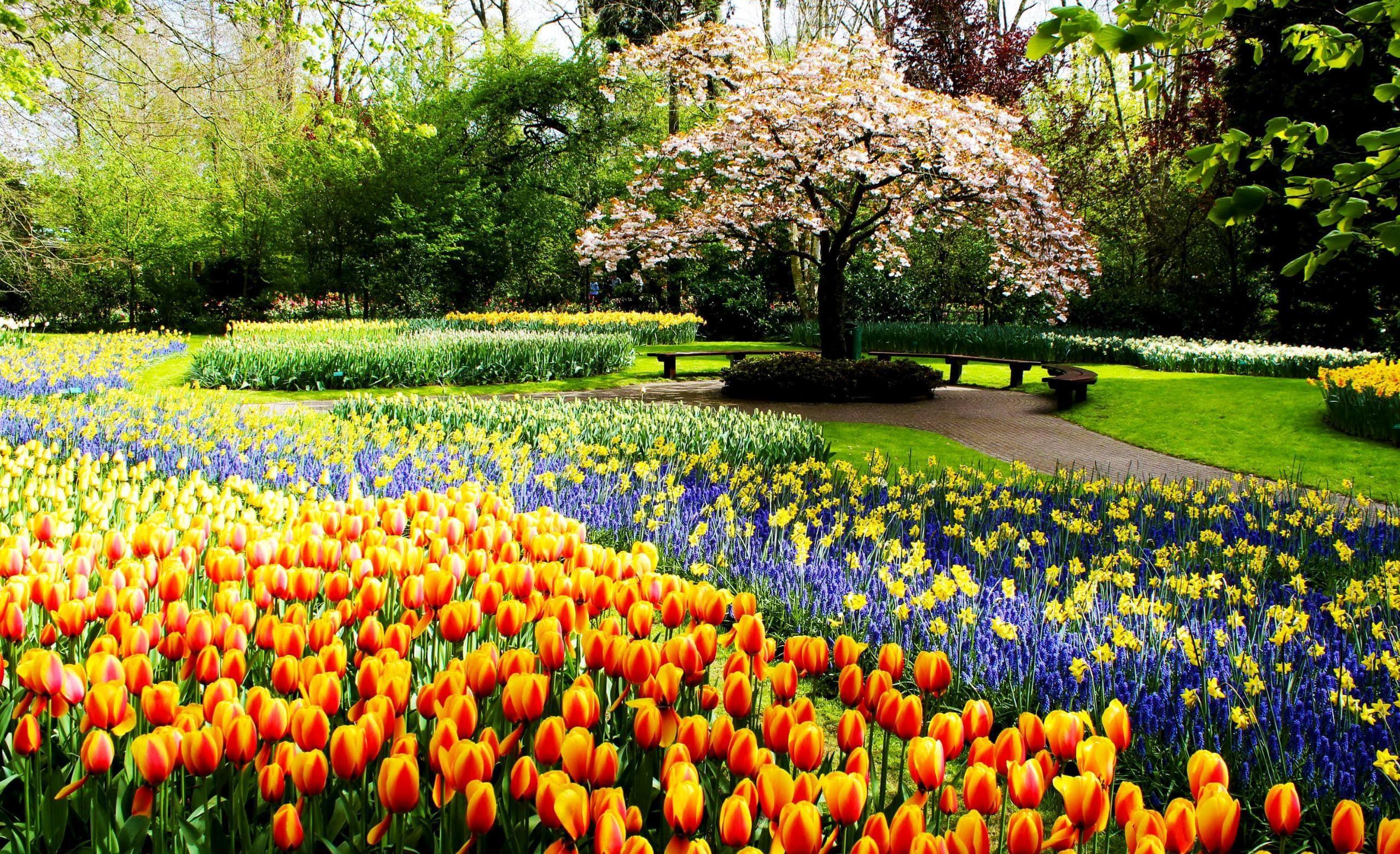 Какие работы нужно проводить в саду весной? Подготовка сада к весне
