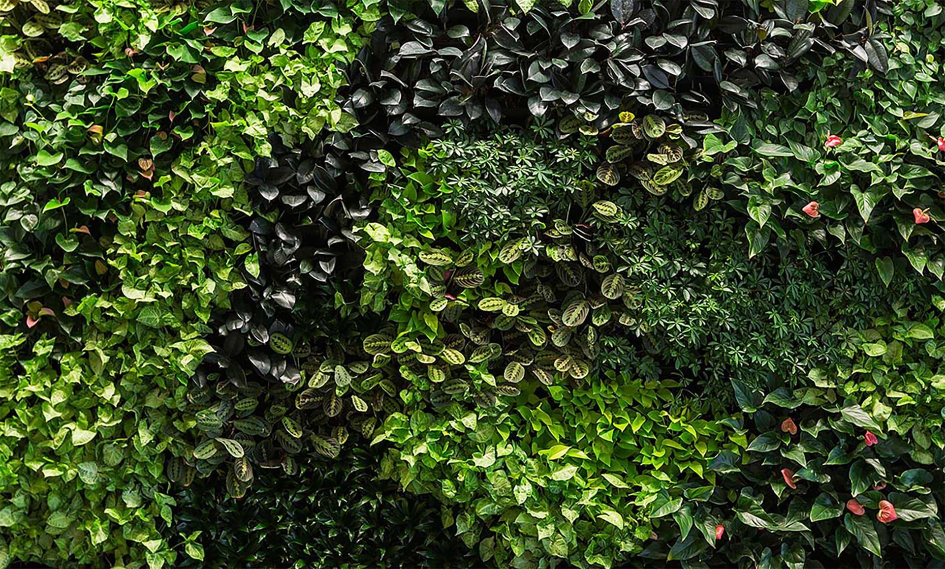 Какие растения выбрать для вертикального озеленения?