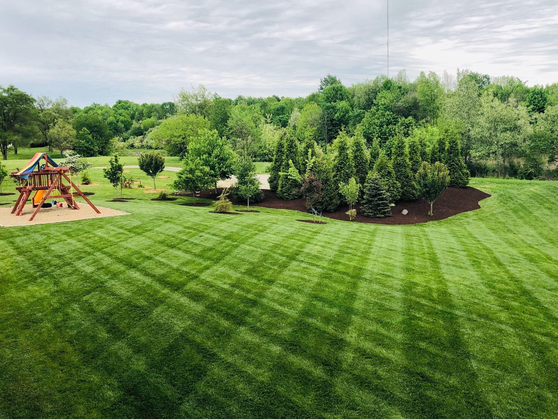 Как сделать газон зеленее чем у соседа: 4 секрета