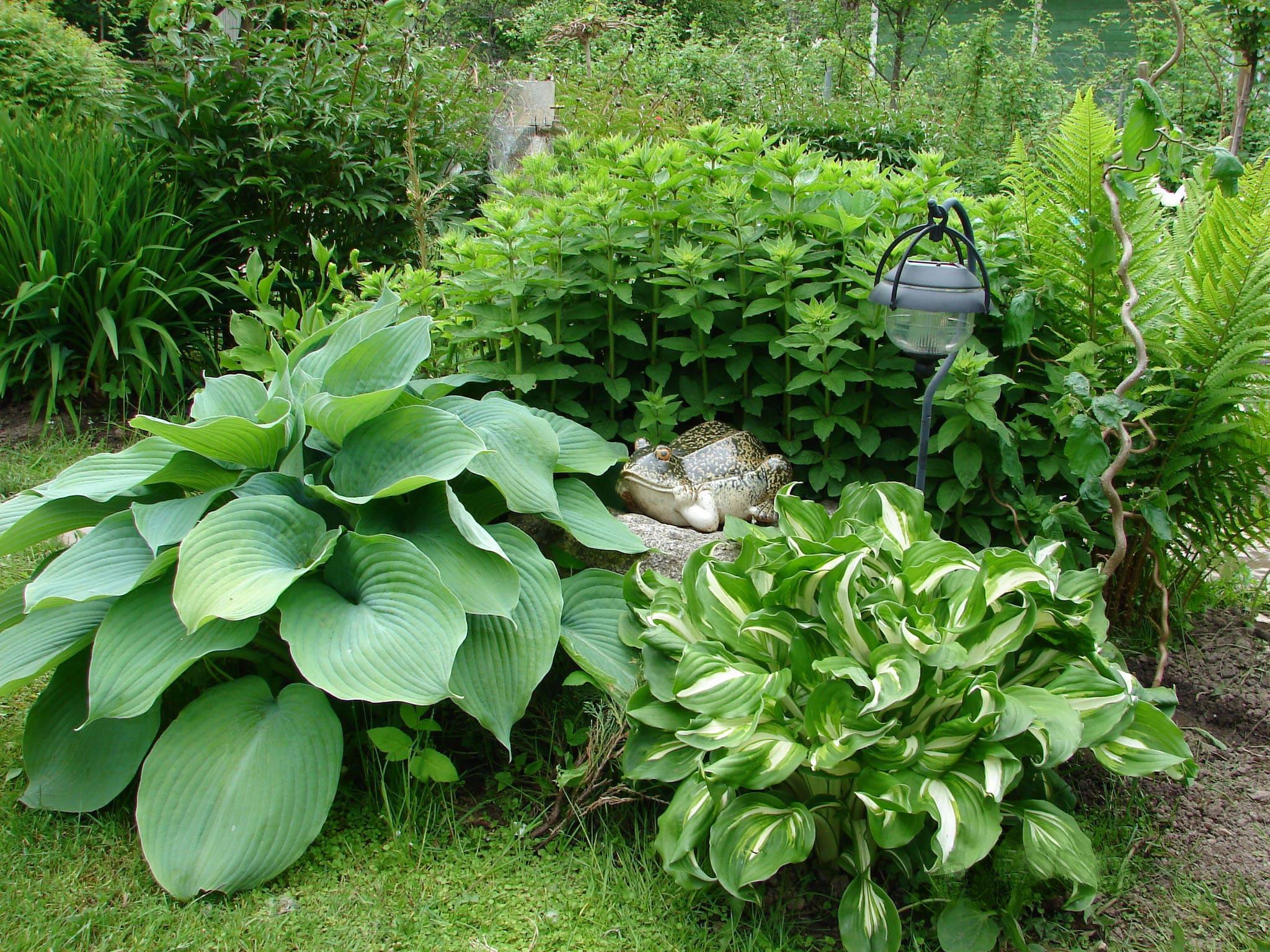 Какие растения стоит посадить в затененном саду?