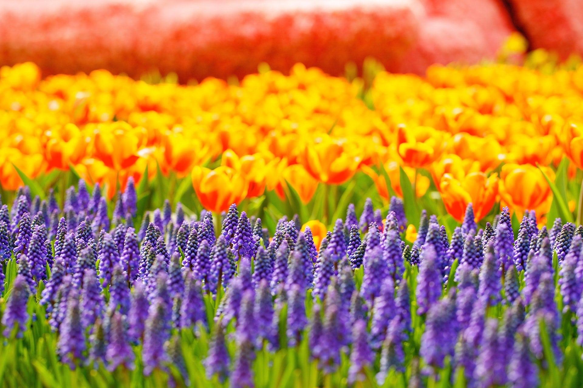 7 советов по выращиванию цветов на срезку