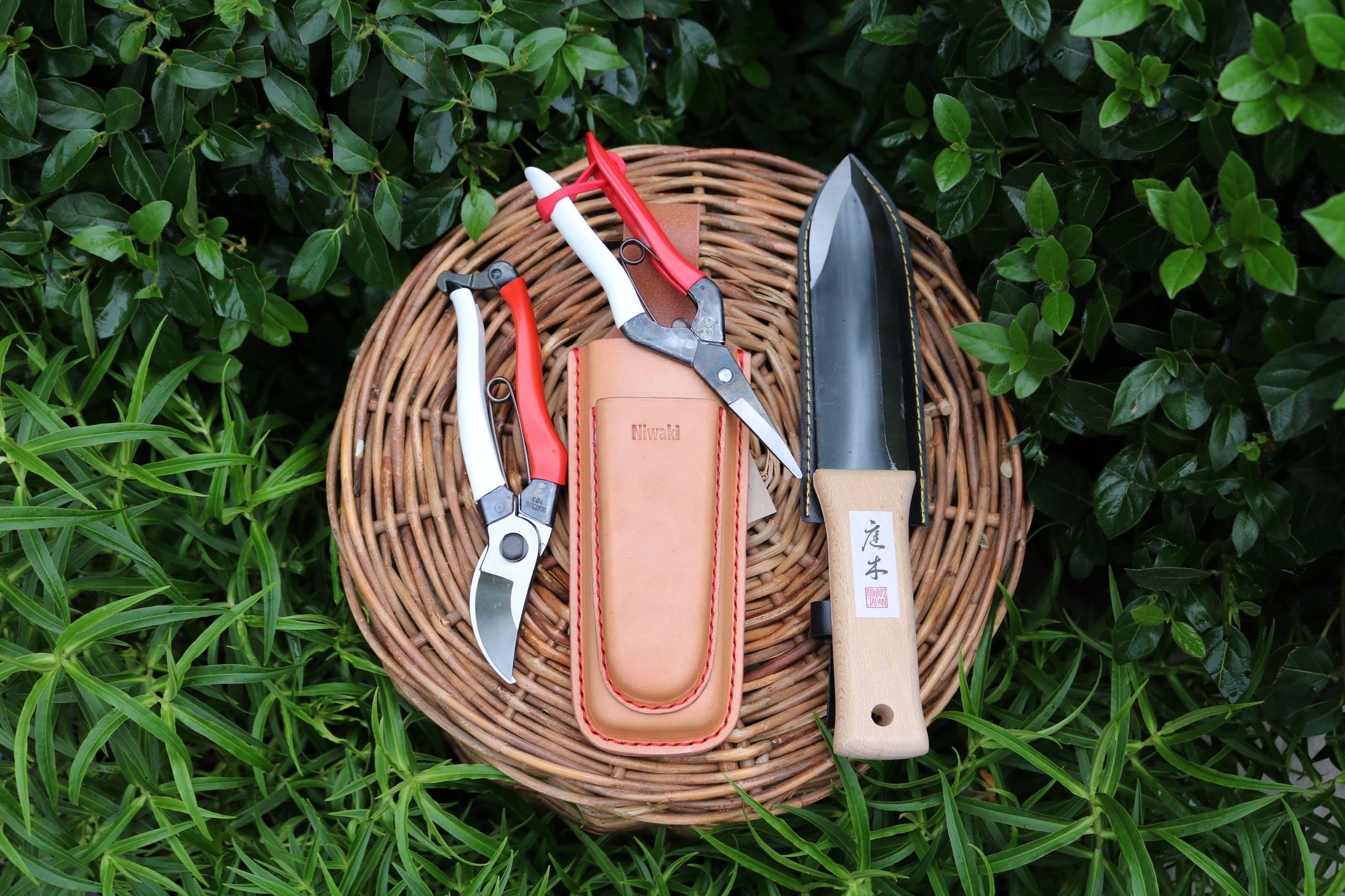 Основы обрезания: как сохранить цветение растений