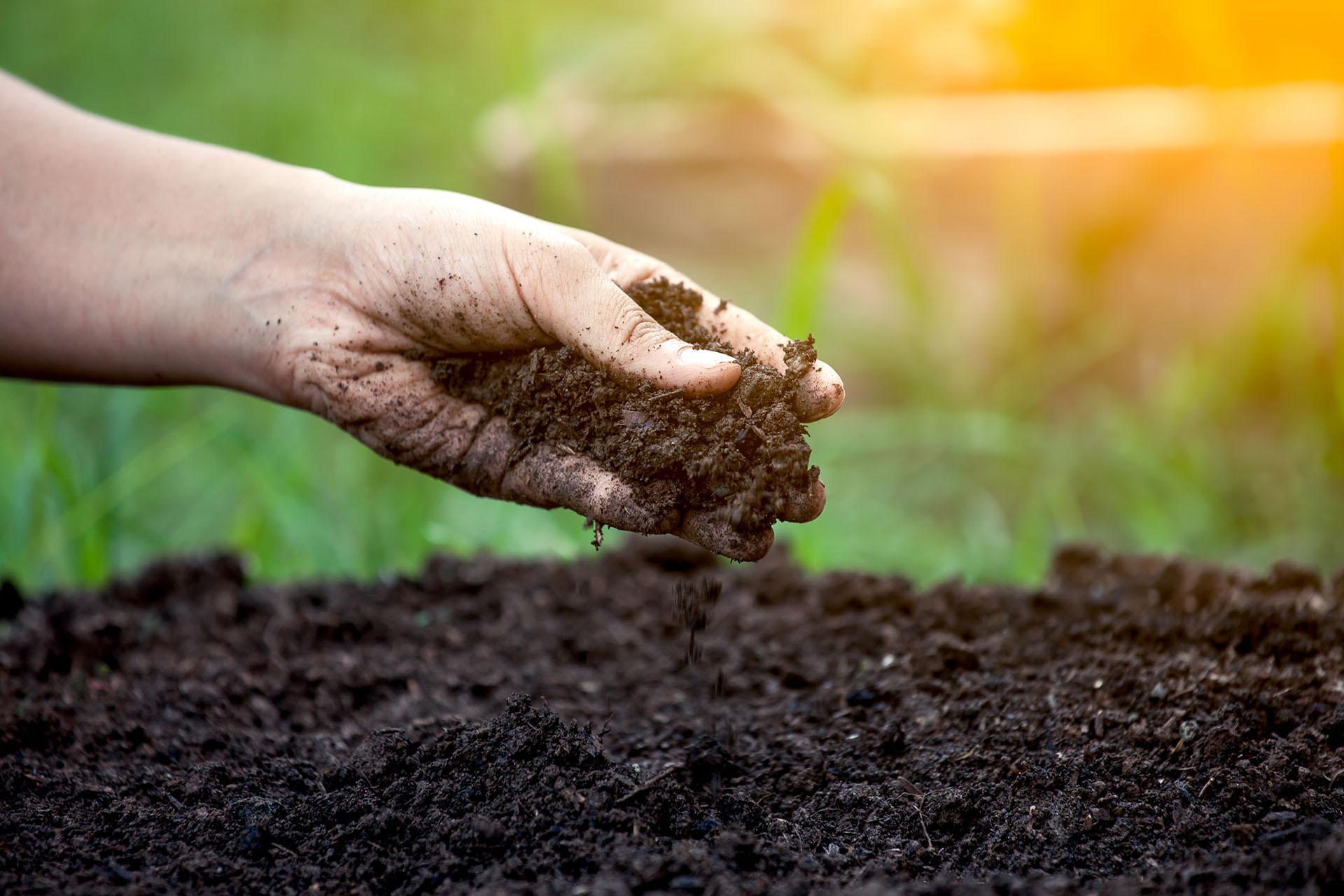Знай свою землю: как узнать тип почвы и зачем это нужно?