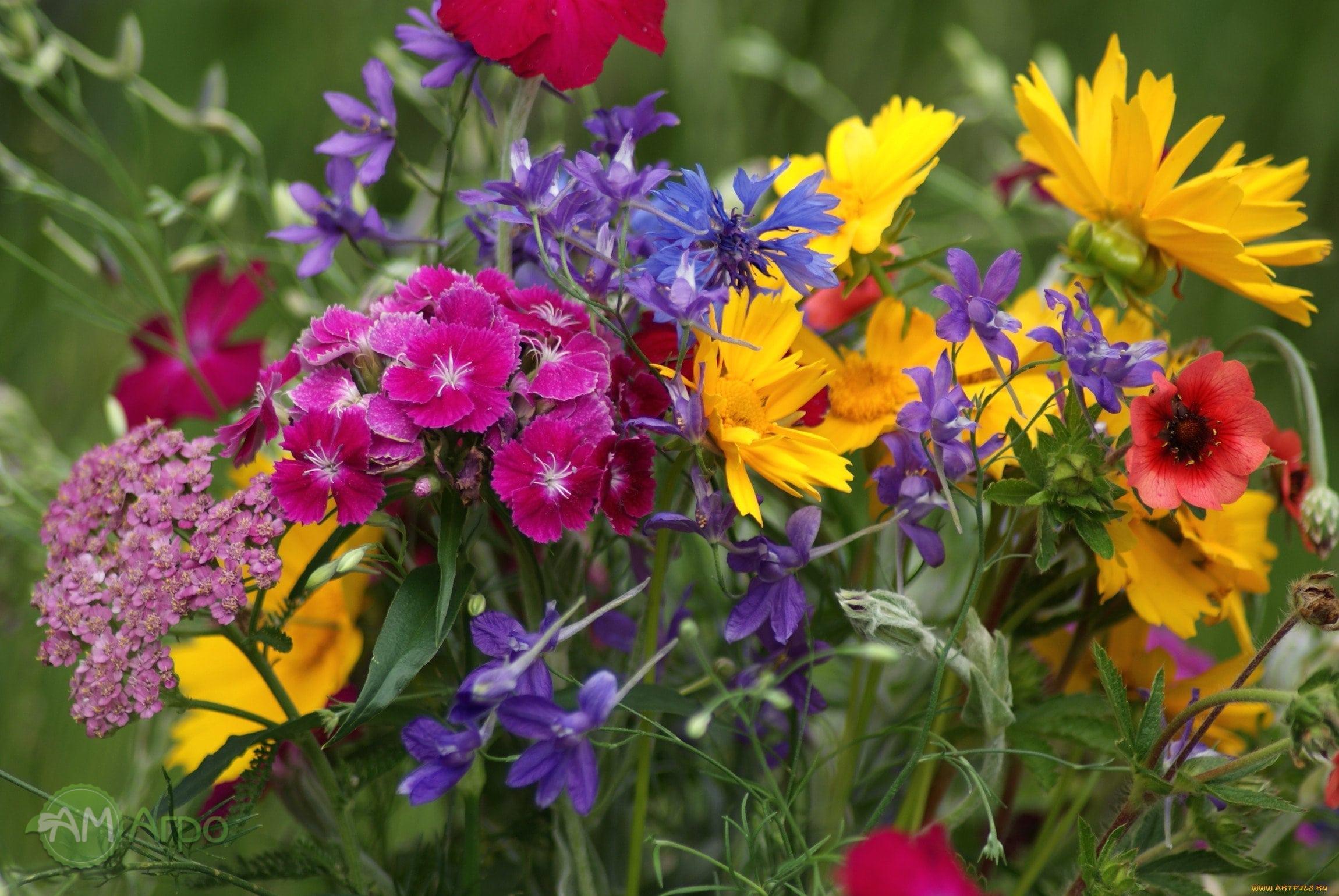 10 летних растений для вашего сада